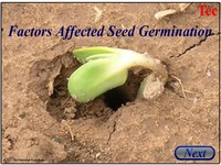 Factors Affected Seed Germination New