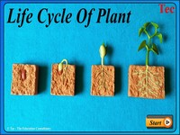 Life Cycle of Palnt Germination New