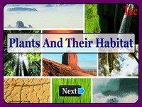 Plants & their habitat New