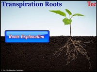 Transpiration By Roots
