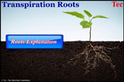 Transpiration-By-Roots
