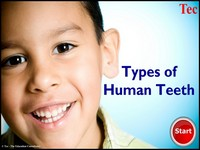 Types of Human Teeth