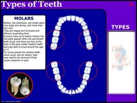 Types of Teeth New